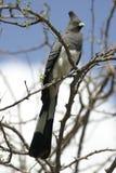 Va-via l'uccello Fotografia Stock