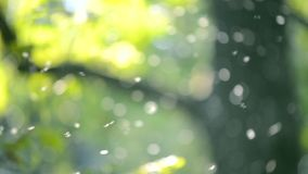 Vaag Achtergrond Klein wit insecten midges close-up in lucht in het bos stock footage