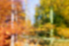 Vaag Autumn Forest Photo Stock Foto