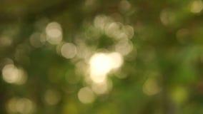 Vaag beeld Mooie groene aardachtergrond stock footage