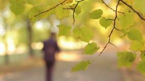 Vaag beeld van een jonge mens in een kostuum die door het de herfstpark lopen stock video