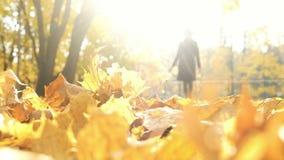 Vaag silhouet van een vrouw die in het de herfstlicht lopen in gevallen bladeren, abstractie stock video