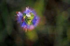 Vaag van bloem op donkergroene achtergrond Royalty-vrije Stock Foto