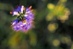 Vaag van bloem op donkergroene achtergrond Royalty-vrije Stock Afbeeldingen