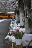 Vaarwel de de sneeuwlente van de wintertulpen royalty-vrije stock afbeelding