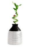 Vaas met bamboe Royalty-vrije Stock Fotografie