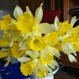 Vaas met de lentebloemen daarin royalty-vrije stock afbeeldingen