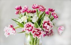 Vaas met dubbele Nederlandse tulpen Royalty-vrije Stock Afbeelding