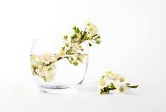 Vaas met een bloemtak royalty-vrije stock foto's