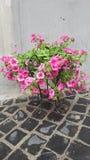 Vaas met roze bloemen Stock Foto
