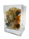 Vaas met shells Royalty-vrije Stock Foto's