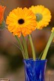 Vaas van Bloemen Stock Foto's