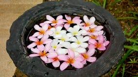 Vaas van water met roze en witte frangipanibloemen daarin stock video