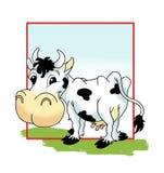 A vaca Fotografia de Stock