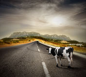 Vaca Foto de Stock Royalty Free