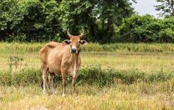 Vaca stock de ilustración