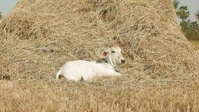 Vaca metrajes