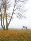 Vaca bajo el árbol Imagenes de archivo