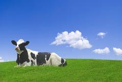 Vaca blanco y negro Imágenes de archivo libres de regalías