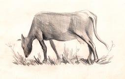 Vaca bosquejo dibujo de lápiz pintado a mano Foto de archivo libre de regalías