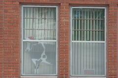Vaca com de Santa Hat Peering a janela para fora Fotografia de Stock