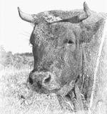 Vaca com o trevo na boca Ilustração ilustração do vetor