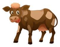 Vaca com pele marrom Imagem de Stock
