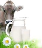 Vaca com um leite foto de stock