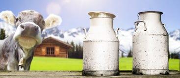 Vaca con las latas de la leche fotos de archivo libres de regalías