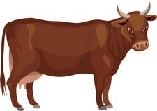 Vaca de Brown Imagens de Stock