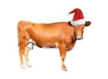 Vaca de Brown foto de stock