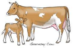 Vaca de Guernesey Fotos de archivo