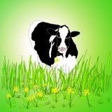 Vaca de Holstein Fotos de archivo libres de regalías