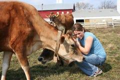 Vaca de Jersey en un pasto Imagen de archivo libre de regalías