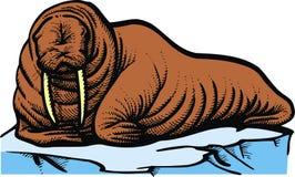 Vaca de mar de Brown ilustração do vetor