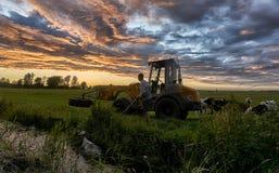 Vaca del rescate del granjero Fotos de archivo