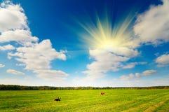Vaca dois pequena no pasto do outono. Imagens de Stock Royalty Free
