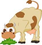 Vaca dos desenhos animados que come a grama Foto de Stock Royalty Free