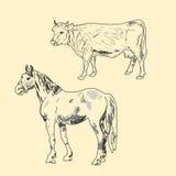 Vaca e cavalo Ilustração do Vetor