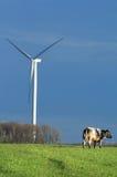 Vaca e moinho de vento na paisagem fotografia de stock