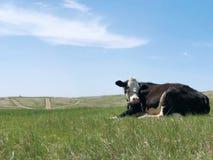 Vaca e moinho de vento na pastagem fotografia de stock royalty free