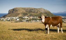 Vaca e montanha Fotos de Stock