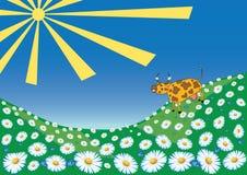 Vaca em um prado Fotografia de Stock Royalty Free