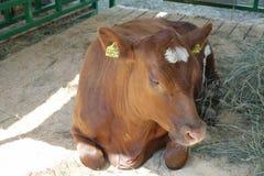 Vaca em uma gaiola Foto de Stock