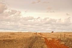 Vaca en el horizonte Fotografía de archivo