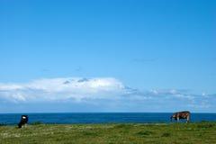 vaca en el horizonte Foto de archivo libre de regalías