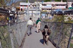 Vaca en el puente peatonal Imagen de archivo libre de regalías