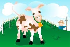 Vaca en granja Fotos de archivo libres de regalías