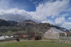 Vaca en la raíz de la montaña Kazbek Imagenes de archivo