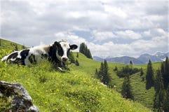 Vaca en un paisaje de la montaña Foto de archivo